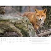 Schweizer Bildkalender 2019