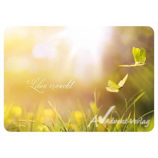Leben erwacht