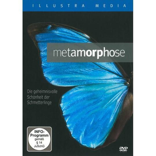 Metamorphose: Die geheimnisvolle Schönheit der Schmetterlinge
